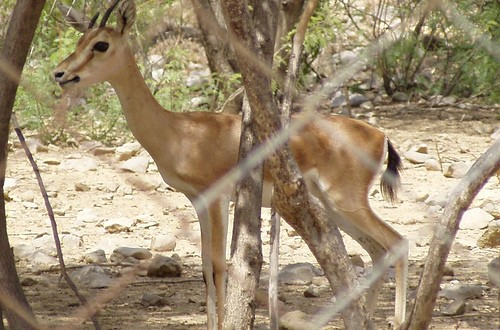 Manglot Wildlife Park, Nizampur